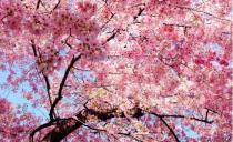 """这周末起,我踏花比樱花还美的""""她"""",将刷爆朋友圈!"""