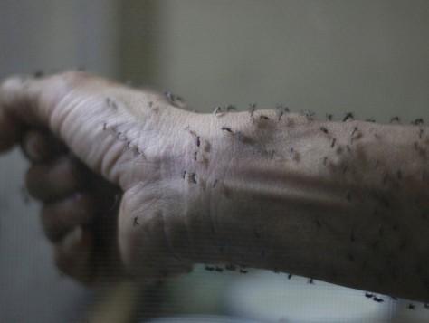 寨卡升级为全球紧急事件 加国已6人感染