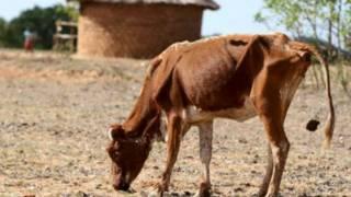 津巴布韦宣告承认全国遭遇严重旱灾