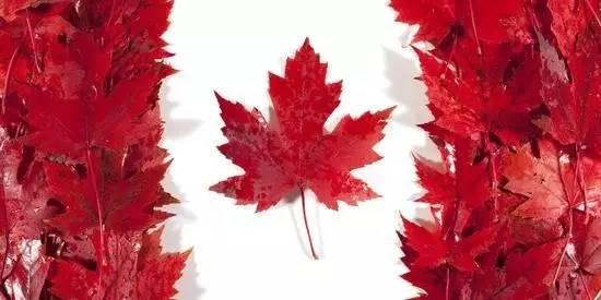 我要离开加拿大了 因为太不习惯!