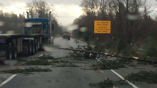 好惨!加拿大BC省遭暴风袭击,一名妇女被树砸死