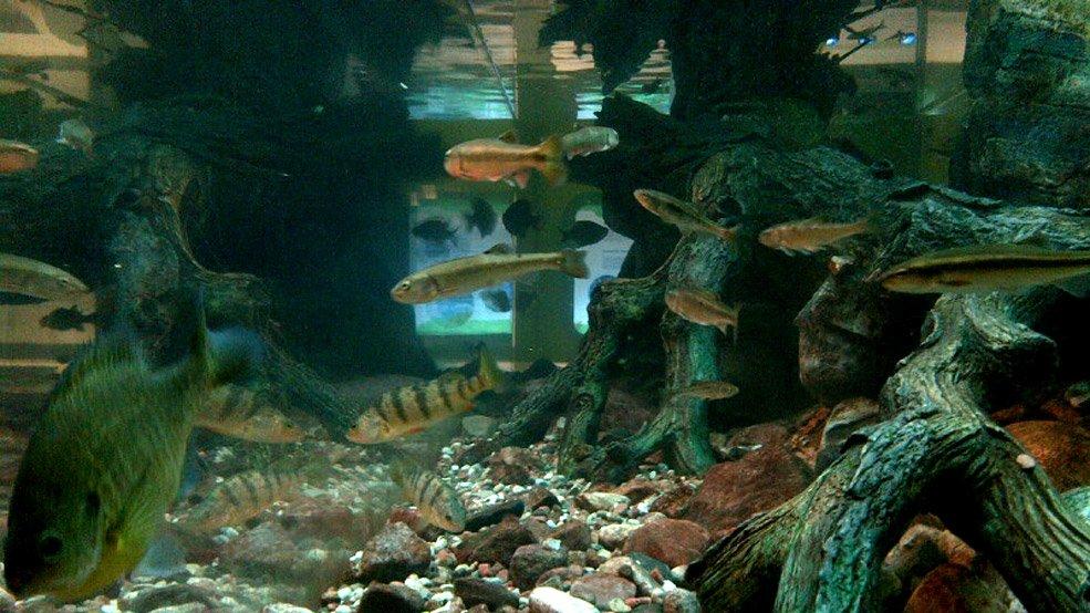freshwater-fish-tank-credit-Canadian-Museum-of-Nature