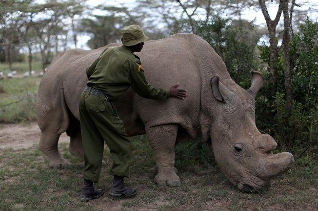 kenya-wildlife23