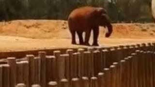 动物园大象扔石头 7岁女孩被击中丧命