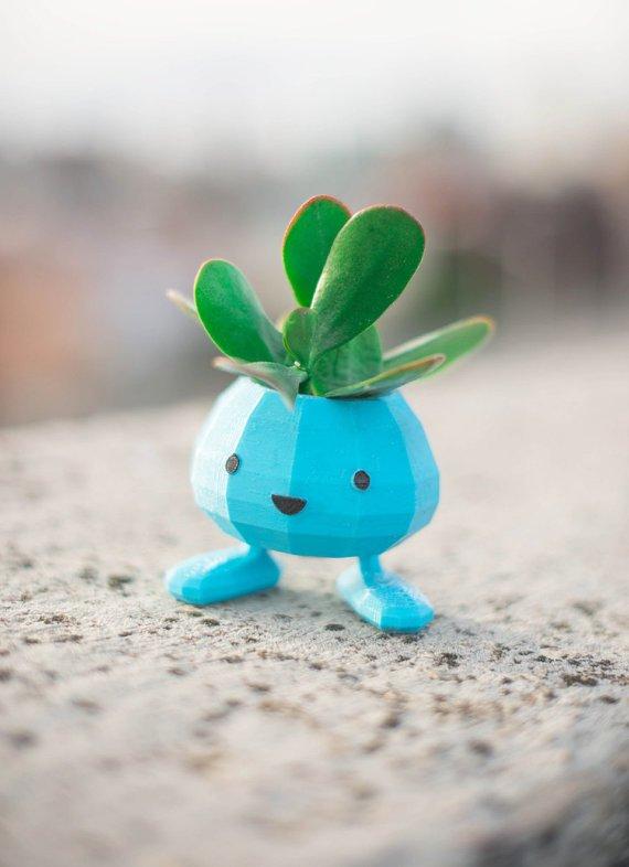 这棵古怪的小植物