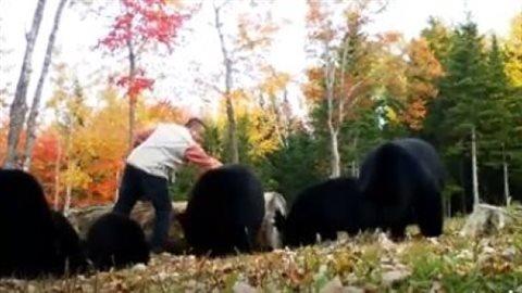 新不伦瑞克省夫妇创建喂野生黑熊旅游项目