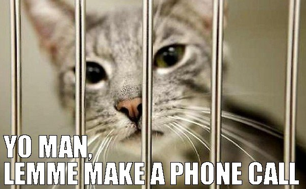 yo-man-just-lemme-make-1-phone-call-cat-behind-bars-meme-real-money