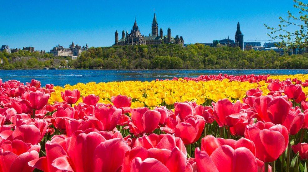 Canadian-Tulip-Festival1-985x552