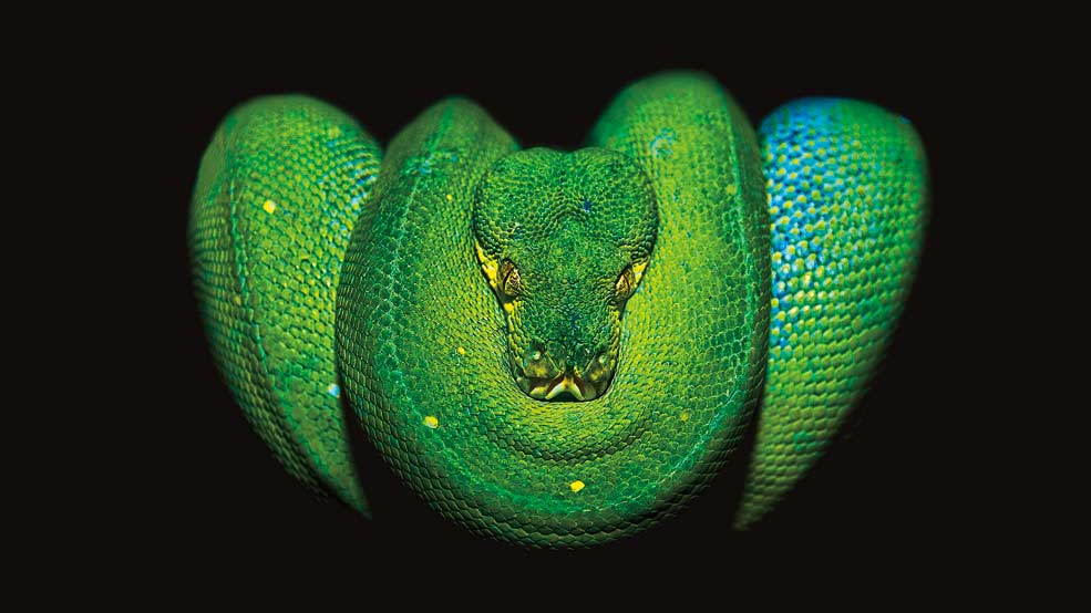 Reptiles-Python-credit-Canadian-Museum-of-Nature