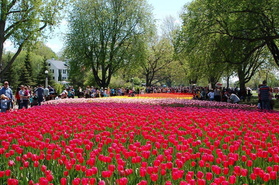 SeaofTulipsandPeople