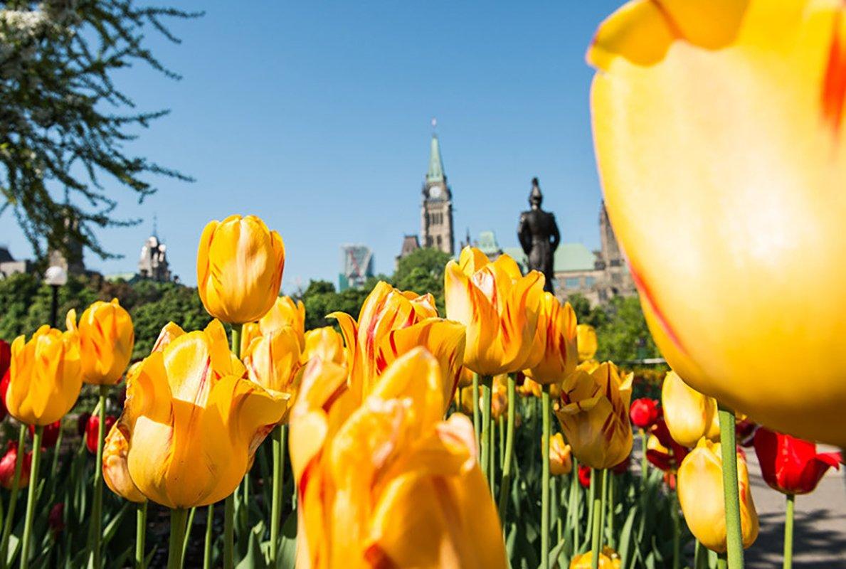 tulip-festival-2