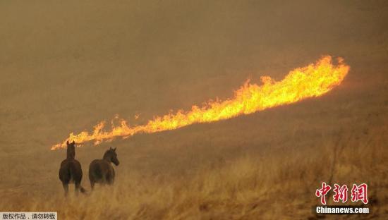 美国北加州大火灾情持续扩大 上百人失联