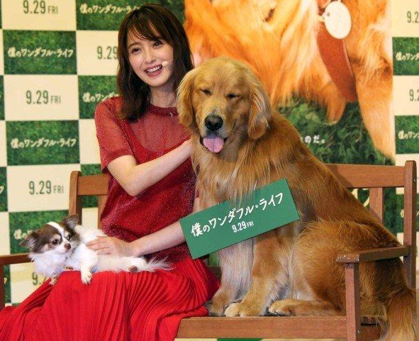 佐佐木希带爱犬走T台 自称是狗奴